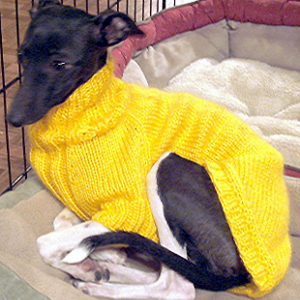free dog sweater knitting pattern